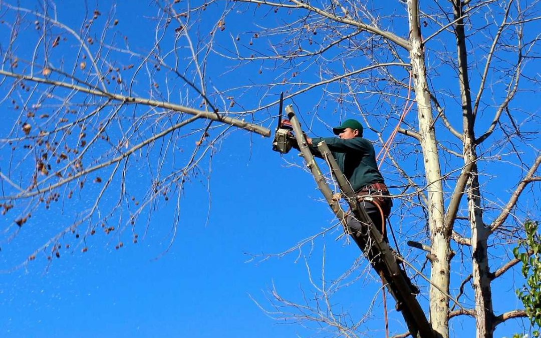 Overview On Tree Services And The Benefits They Offer