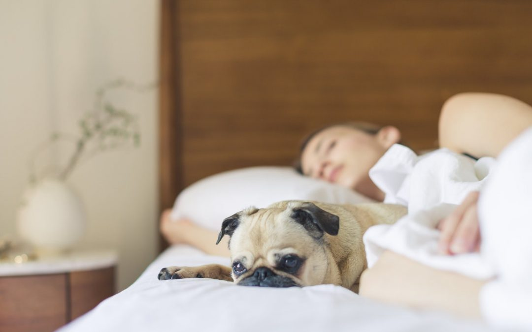Treating Ticks And Fleas In Dogs Naturally – Surefire Ways You Should Try