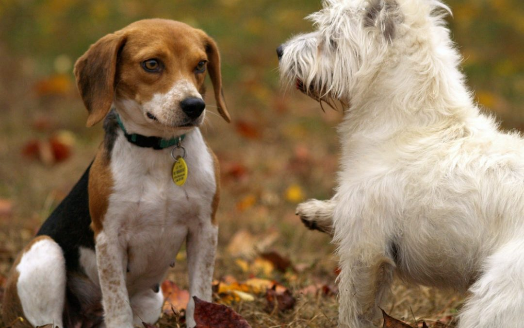 Choosing a Dog Breed – Steps in the Best One for Your Family
