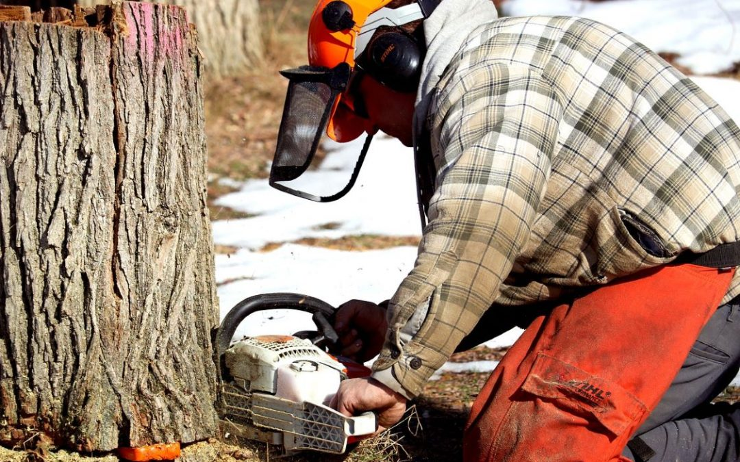 Hiring the Right Tree Felling Team for Your Needs – Hassle-Free Guidelines